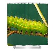 Luna Moth Caterpillar Shower Curtain