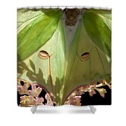 Luna Moth Faux Eyes Shower Curtain