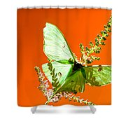 Luna Moth On Astilby Orange Back Ground Shower Curtain