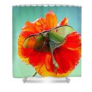 Luna Moth On Poppy Aqua Back Ground Shower Curtain