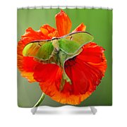 Luna Moth On Poppy Square Format Shower Curtain