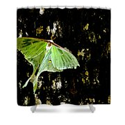 Luna Moth On Tree Shower Curtain