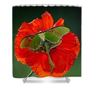 Luna Moth Orange Poppy Green Bg Shower Curtain