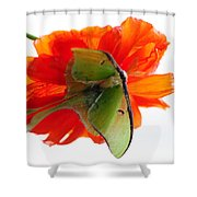 Luna Moth Poppy High Key Shower Curtain