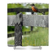 Lunch Shower Curtain