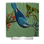 Lunch Time For Blue Bird Shower Curtain