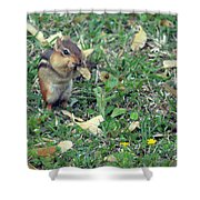Lunch Time Photo B Shower Curtain
