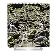 Lunch With The Gulls Shower Curtain