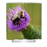 Lunching Atop A Thistle Shower Curtain