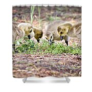 Lunchtime Explorations  Shower Curtain