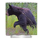 Lunging Black Bear Near Road In Grand Teton National Park-wyoming   Shower Curtain