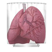 Lungs And Bronchi Shower Curtain