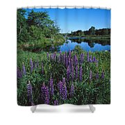 Lupin And Lake-sq Shower Curtain