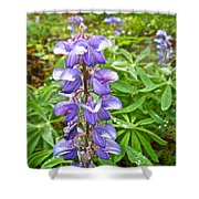 Lupine Along Trail To Rancheria Falls In Yk-canada   Shower Curtain