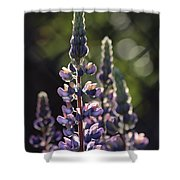 Lupine At The Gate Shower Curtain