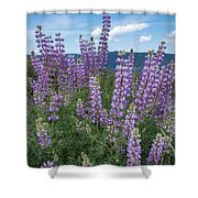 Lupine Blooms Of Bald Hills Shower Curtain