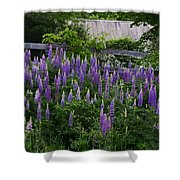 Lupine By The Fence Shower Curtain