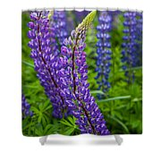 Lupine Curve Shower Curtain