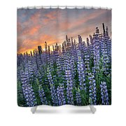 Lupine Dawn Shower Curtain