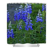 Lupine Family Shower Curtain