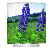 Lupine Flower Shower Curtain