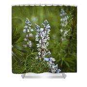 Lupine Shower Curtain