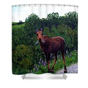 Lupine Loving Moose Shower Curtain