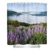 Lupine Of Bald Hills Shower Curtain