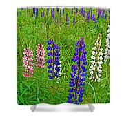 Lupine On Campobello Island-nb Shower Curtain