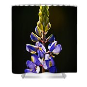 Lupine  Shower Curtain