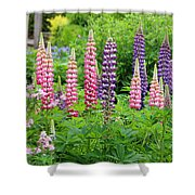 Lupines 5976 Shower Curtain