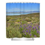 Lupines At Mono Lake Shower Curtain
