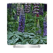 Lupines In The Rain Shower Curtain