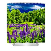 Lupines Light Shower Curtain