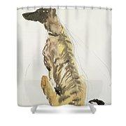Lurcher Sitting Shower Curtain by Lucy Willis