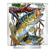 Lurking Bass Shower Curtain by Carey Chen