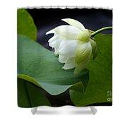 Luscious Lotus Shower Curtain