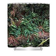 Lush Ferns Of The Forest Shower Curtain