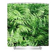 Lush Green Fern Shower Curtain