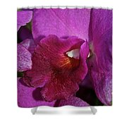 Lush Lavender Shower Curtain