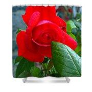 Luss Rose Shower Curtain