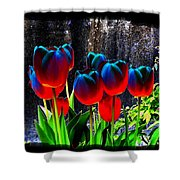 Lustrous Tulips Shower Curtain