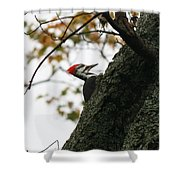 Lyndonville Pileated Woodpecker Shower Curtain