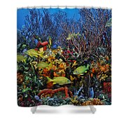 Lynns Reef On A Perfect Day Shower Curtain
