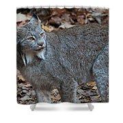 Lynx Eyes Shower Curtain