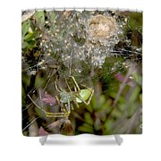Lynx Spider And Young Shower Curtain