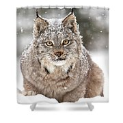 Lynx Stare Shower Curtain