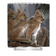 Lynx Trio Shower Curtain