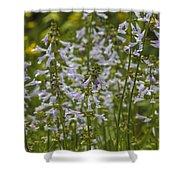 Lyreleaf Sage Wildflowers - Salvia Lyrata Shower Curtain