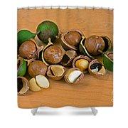 Macadamia Nuts Shower Curtain